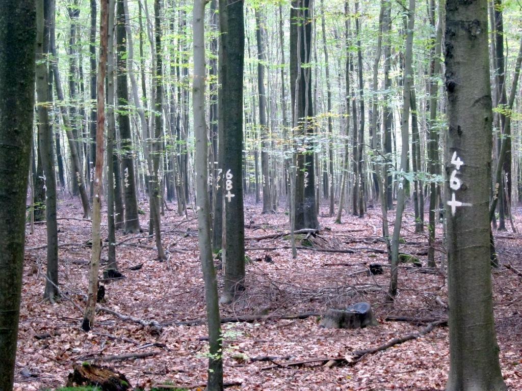 Forschungsprojekt der Nordwestdeutschen Forstlichen Versuchsanstalt im Lüßwald zur Optimierung der Holzernte in Buchenbeständen