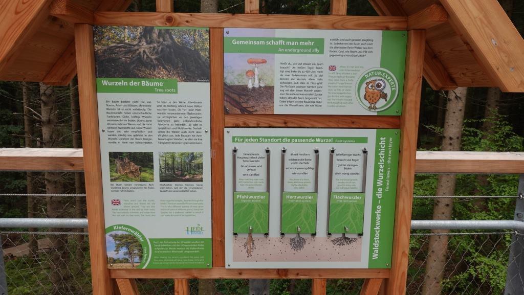 Auf dem Baumwipfelpfad und dem zugehörigen Waldlehrpfad gibt es mehr als 20 Umwelt- und Lernstationen und deutscher und englischer Sprache.