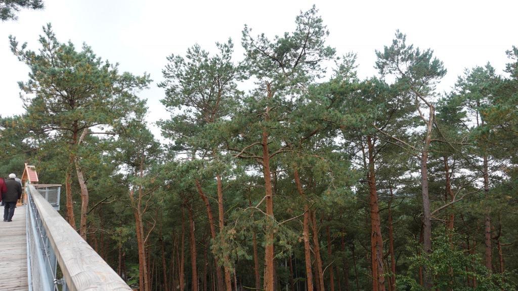 Auf dem Pfad gehen die Besucher in bis zu 21&nbsp,m Höhe durch die Baumwipfel.