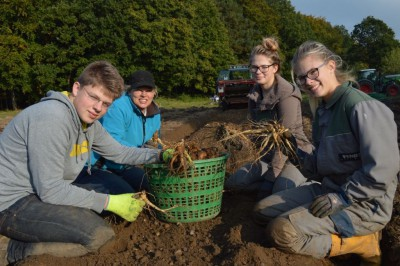 Ginsengernte 2015 FloraFarm Bockhorn - Familie Rodemeier bei der Arbeit