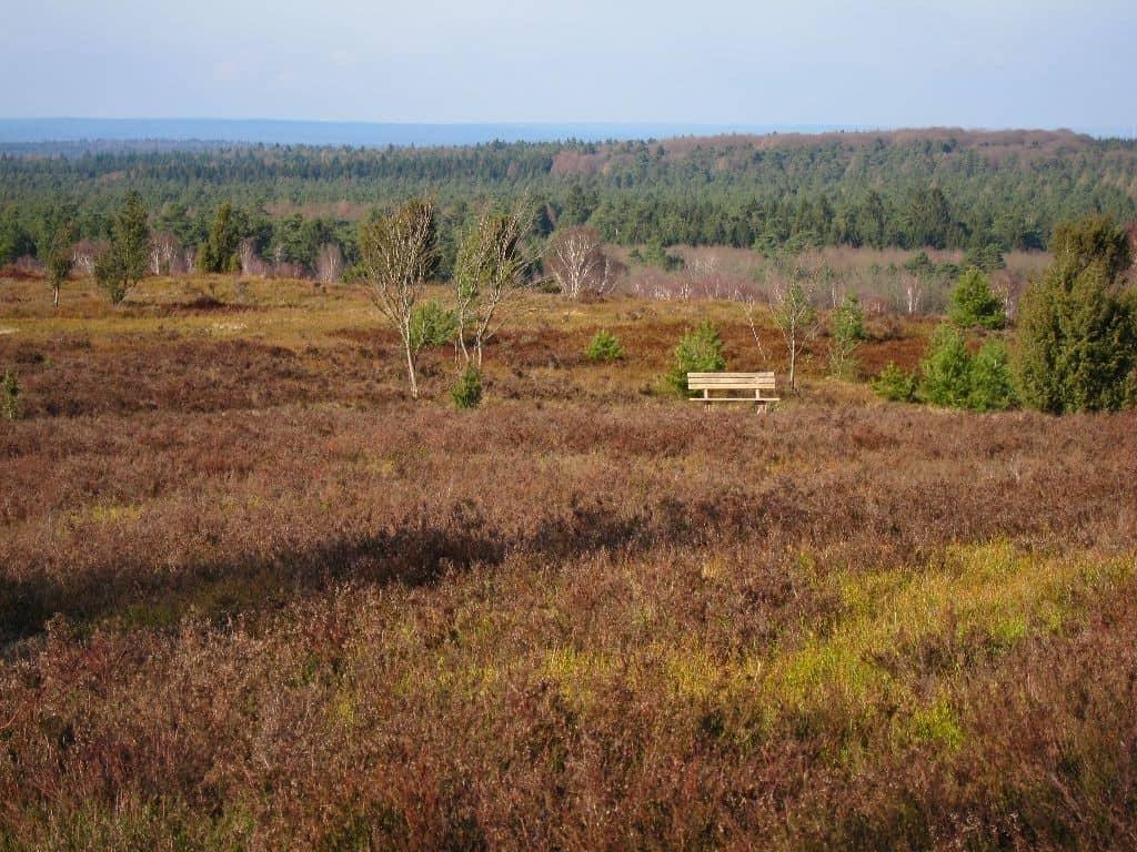 Farbenfrohe Winterlandschaft im Sonnenschein mit Holzbank am Wilseder Berg