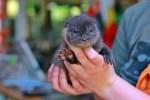 Dienstags und mittwochs kann man im OTTER-ZENTRUM dabei sein, wenn der kleine Otter sein Fläschchen bekommt. © Aktion Fischotterschutz e.V.