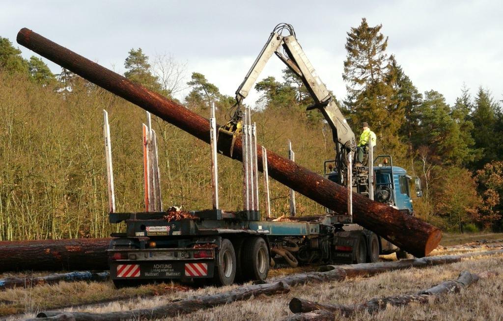 Von den Fuhrleuten werden die Nadelholz-Stämme am vorgegebenen Platz aufgereiht.  (Foto: Niedersächsische Landesforsten)