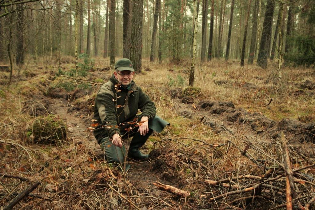 Förster Christoph Siems zeigt den Saatstreifen. Foto: Siems / Niedersächsische Landesforsten