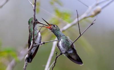 Neun Küken unterschiedlichen Alters werden im Weltvogelpark aufgezogen. Foto: Weltvogelpark Walsrode