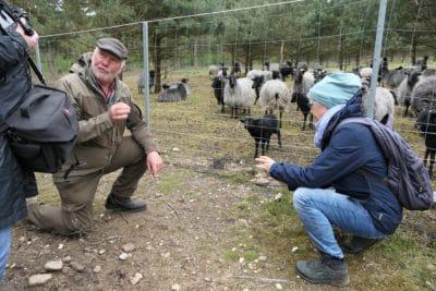 von Hörsten erzählt den Lehrerinnen der Naturparkschule Sprötze-Trelde von der Lebensweise der Heidschnucken.