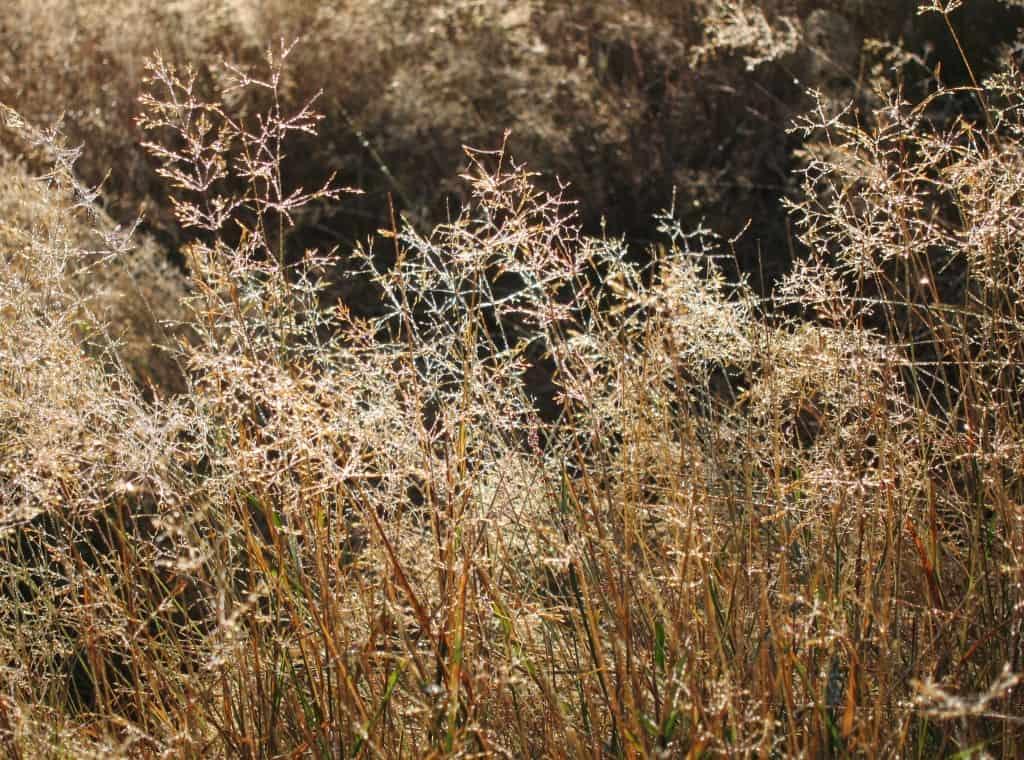 Gras mit Tautropfen im Sonnenlicht