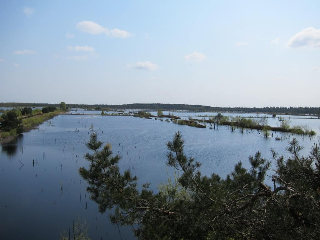 Brut-, Schlaf- und Rastsplatz für Vögel: Die Wasseflächen im Tister Bauernmoor