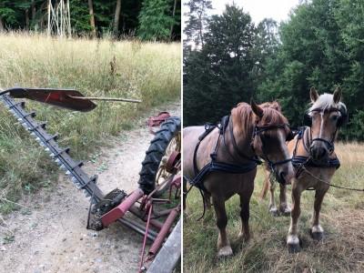 Pferdegespann und Balkenmähwerk als Arbeitsgerät für das Mähen der Grünflächen Foto: Niedersächsische Landesforsten