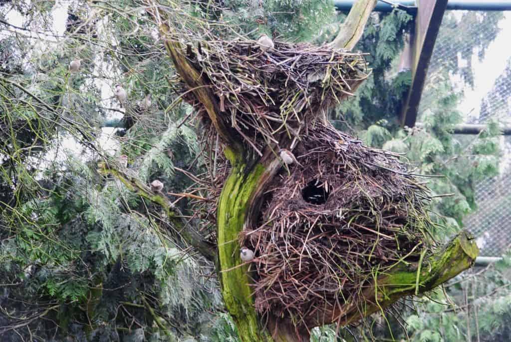 Nester der Hammerköpfe in der Freiflughalle, Foto: Weltvogelpark Walsrode