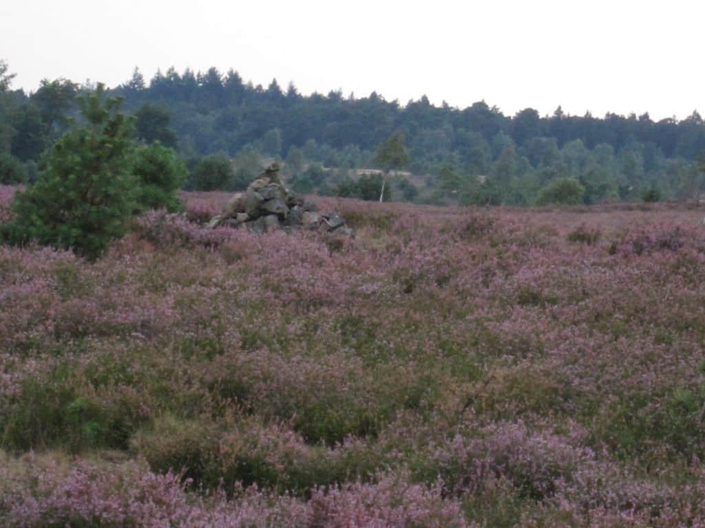 Blühende Heide mit Steinhaufen am Hof Wulfsberg in Schneverdingen