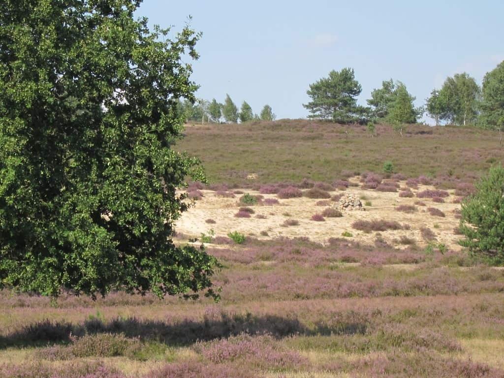 Offene Sandflächen und Steinhaufen in der Timmerloher Heide (23.08.2015)