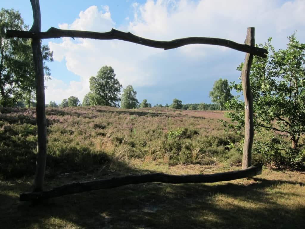 06.08.2016: Heideblüte Wietzer Berg