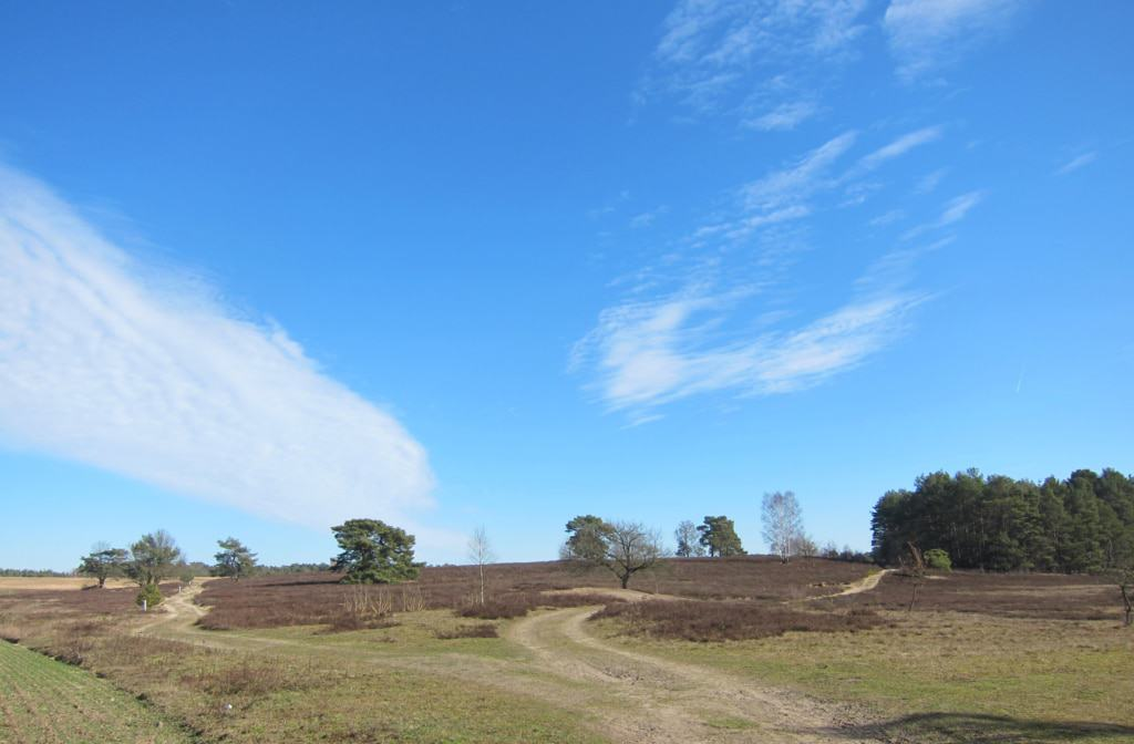 Heidefläche bei Schwindebeck