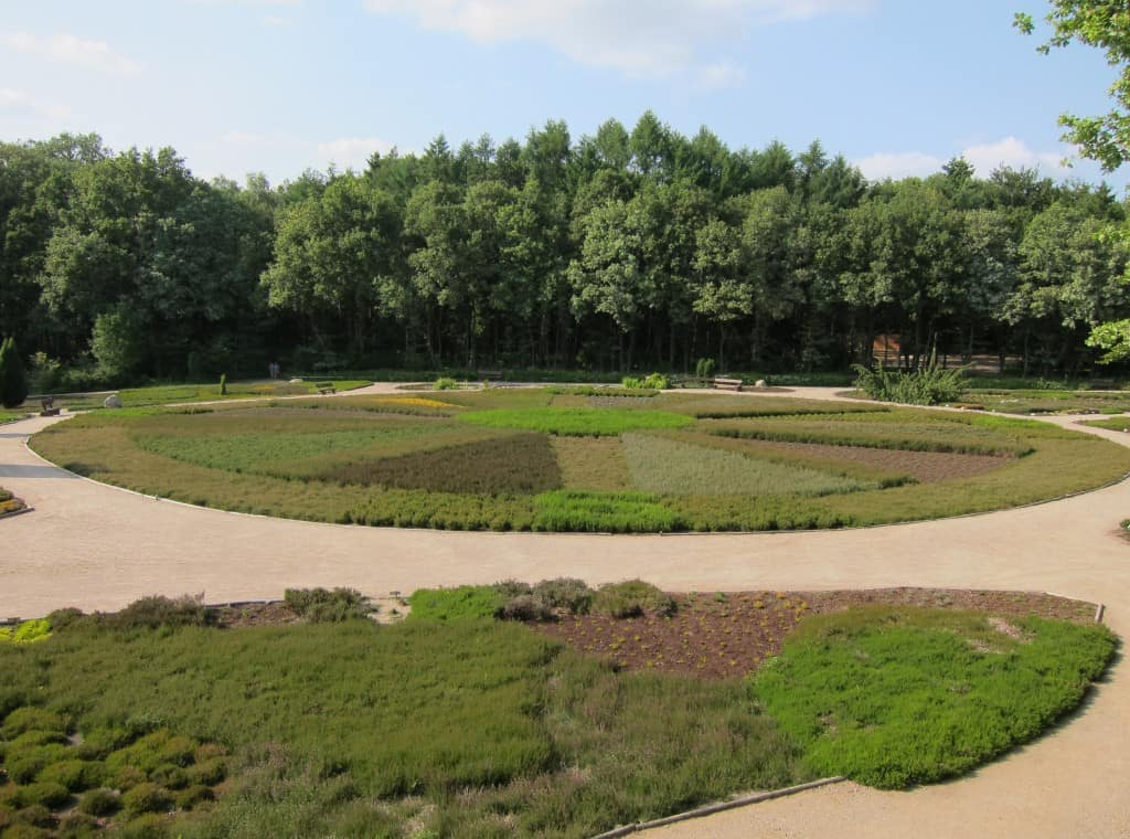 Heidegarten in Schneverdingen im Juli