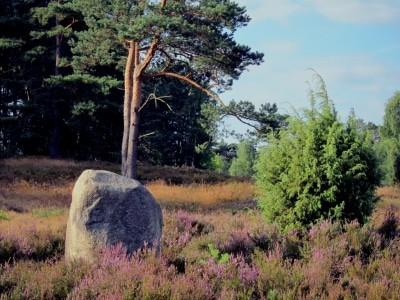 Das alles findet man in der Heide: Heidekraut, Gräser, Kiefern, Findlinge und Wacholder
