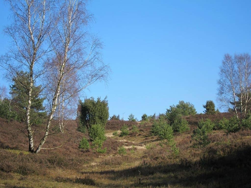 Heidekraut, Birken und Wacholder vor strahlend blauem Winterhimmel.