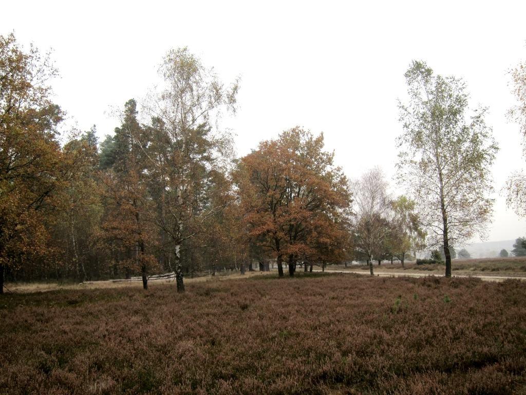 Heidelandschaft im Herbst im Naturpark Lüneburger Heide