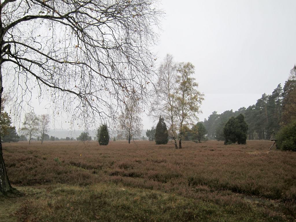 Es ist Herbst in der Heide bei Undeloh