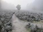 Heidelandschaft mit Raureif im Nebel