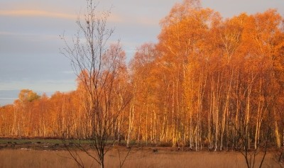 Herbstlaub bei Sonnenaufgang