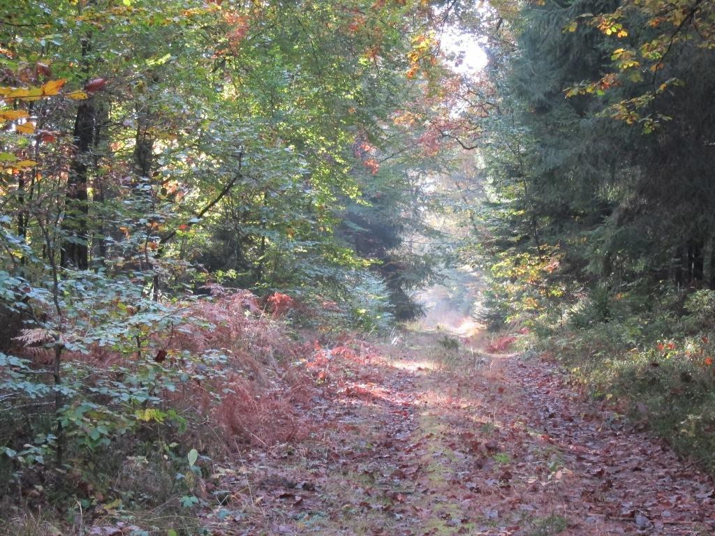 """Wanderweg """"Der Urwald im Lüß"""" in der Herbstsonne"""