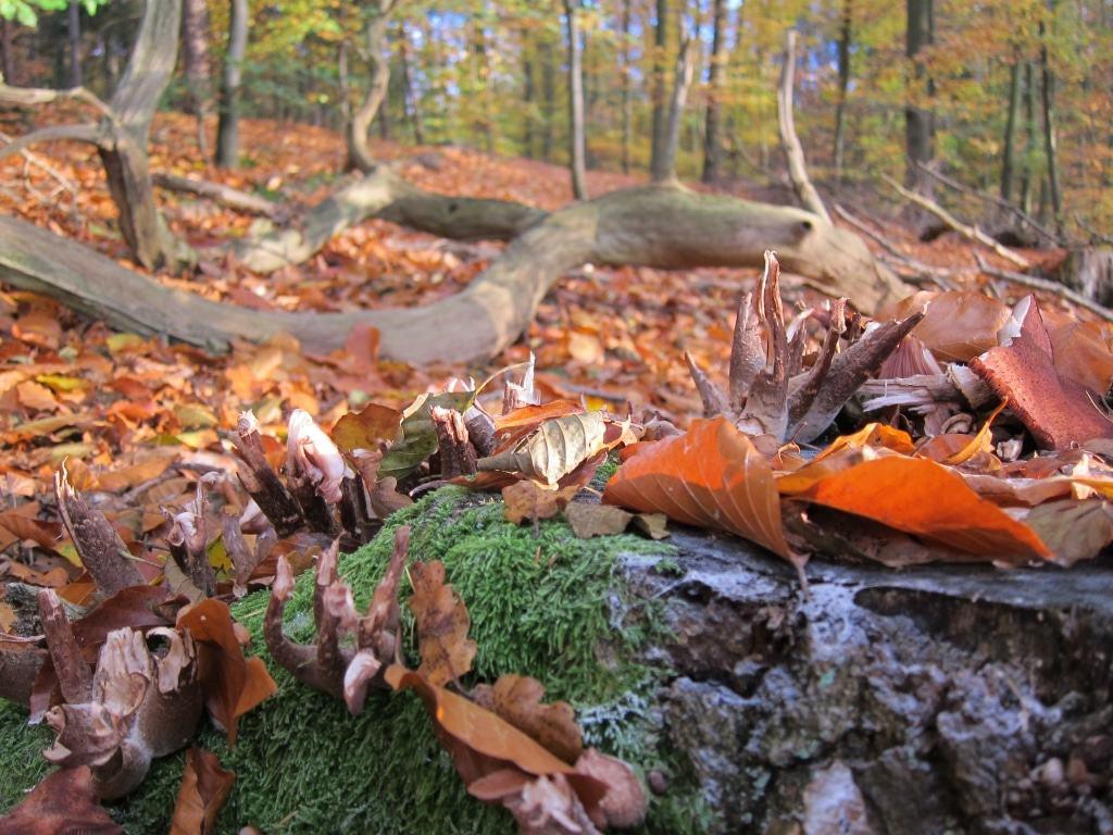 Herbststimmung im Wald Foto: Anne Bremer/SCHÖNE HEIDE