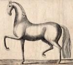 """Illustration aus Joseph Christoph Zehentners """"Gründliche Abhandlung der Kunst, Pferde zu kennen"""" von 1766 Bild: DPM Verden"""