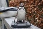 Bei den Pinguinen zeigt der Gewichtcheck, ob sie ausreichend Reserven für die Brutzeit angelegt haben. Foto: Weltvogelpark Walsrode