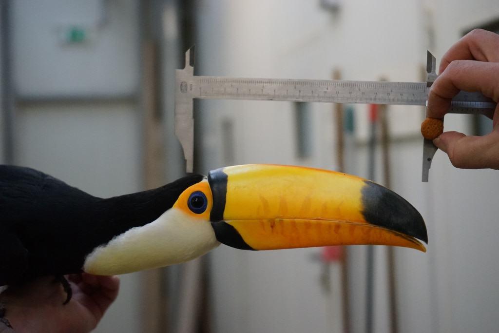 Jedes Jahr vor Beginn der neuen Saison werden die Bewohner des Weltvogelparks Walsrode auf Herz, Nieren und Federkiel untersucht. Foto: Weltvogelpark Walsrode