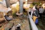 Im Jagdmuseum Wulff wird den Gästen Jagd und Naturschutz auf interessante Weise näher gebracht (Bildnachweis: Südheide Gifhorn GmbH / Frank Bierstedt)