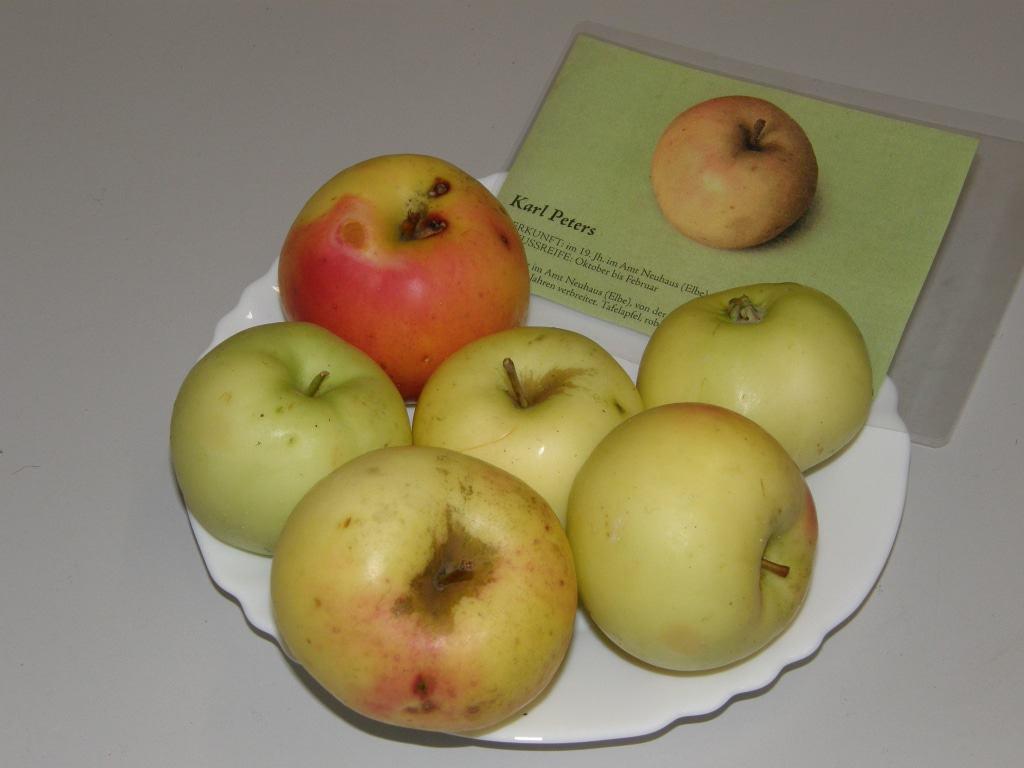 Die alte Apfelsorte Karl-Peters-Apfel aus dem Amt Neuhaus steht im Mittelpunkt eines neuen Sortenerhaltungsprojektes des Streuobstwiesenvereins Lüneburg und der Naturführerin Sabine Wittkopf.