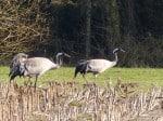 Nordische Gastvogeltage im Biosphärenreservat Niedersächsische Elbtalaue 2014
