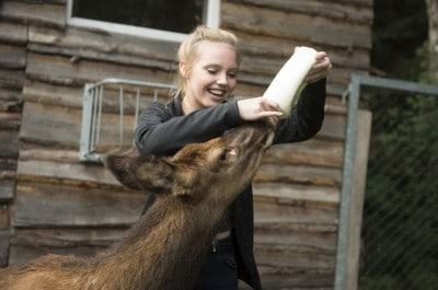 Lina Larissa Strahl füttert ein Wapitikalb im Serengeti Park Hodenhagen
