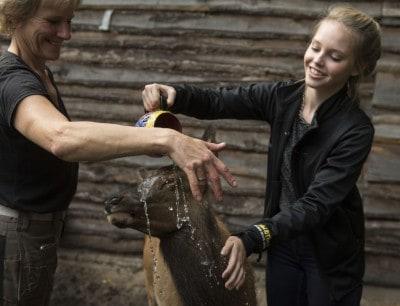 Wapiti-Mädchen Bella im Serengeti Park Hodenhagen wird auf den Namen Bella getauft
