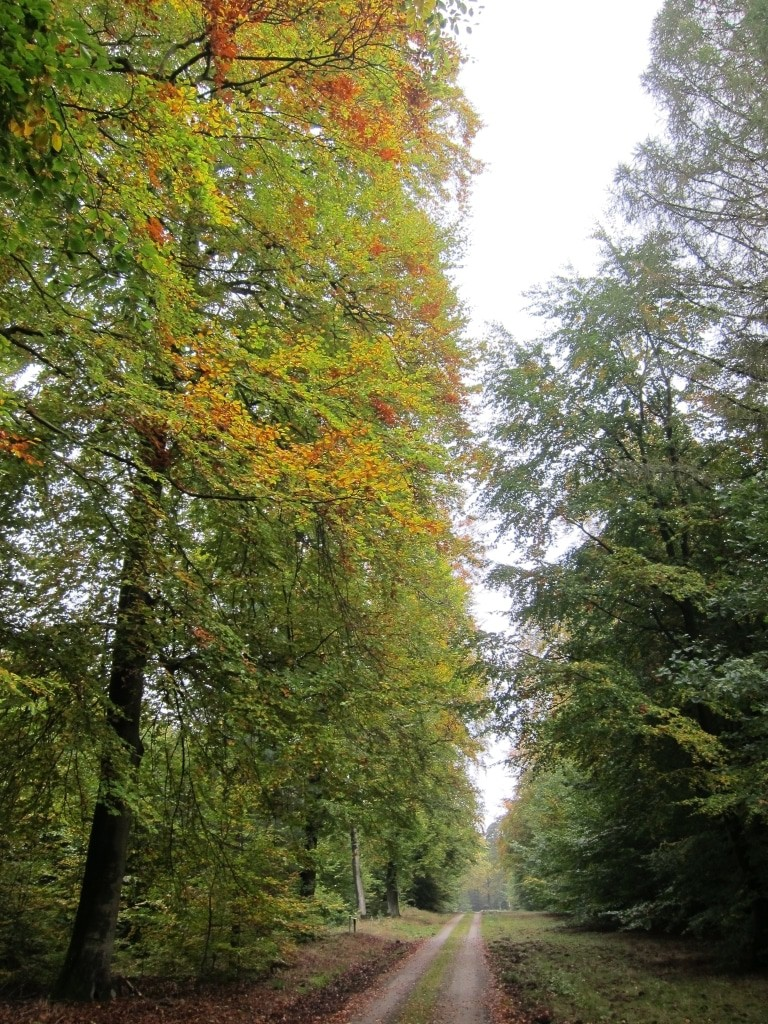 Ende Oktober: Die Laubverfärbung im Lüßwald hat begonnen.