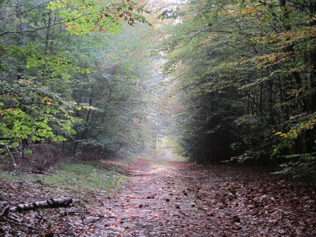 """Wanderweg """"Der Urwald im Lüß"""" - Märchenhafte Lichtstimmung im Wald"""