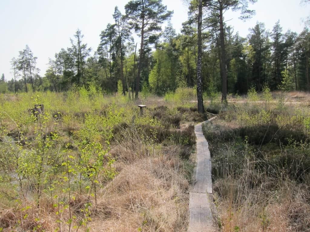"""Auf dem """"Heideweg"""" im Naturschutzgebiet Tister Bauernmoor in Tiste."""