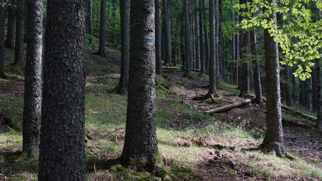 Alte Wälder im Nationalpark Zentrales Balkangebirge