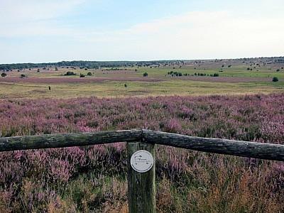 Weite Flächen kennzeichnen den Wümmegrund, das Quellgebiet der Wümme, auf das Sie vom Surhorn schauen.