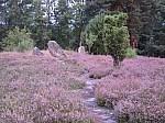 Zahlreiche große Findlinge und die Großsteingräber prägen das Bild der Oldendorfer Totenstatt.