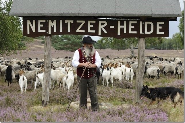 Schäfer mit Heidschnuckenherde und Hund in der Nemitzer Heide, Foto: Nemitzer Heide Touristik