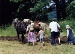 Beim Pflügen mit Kaltblutpferden können die Besucher auch selbst Hand anlegen. Foto: Rundlingsmuseum Wendlandhof Lübeln