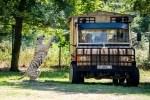 Die Raubtier-Safari startet zweimal täglich, pro Tour können max. 20 Personen teilnehmen. Foto: Serengeti-Park Hodenhagen