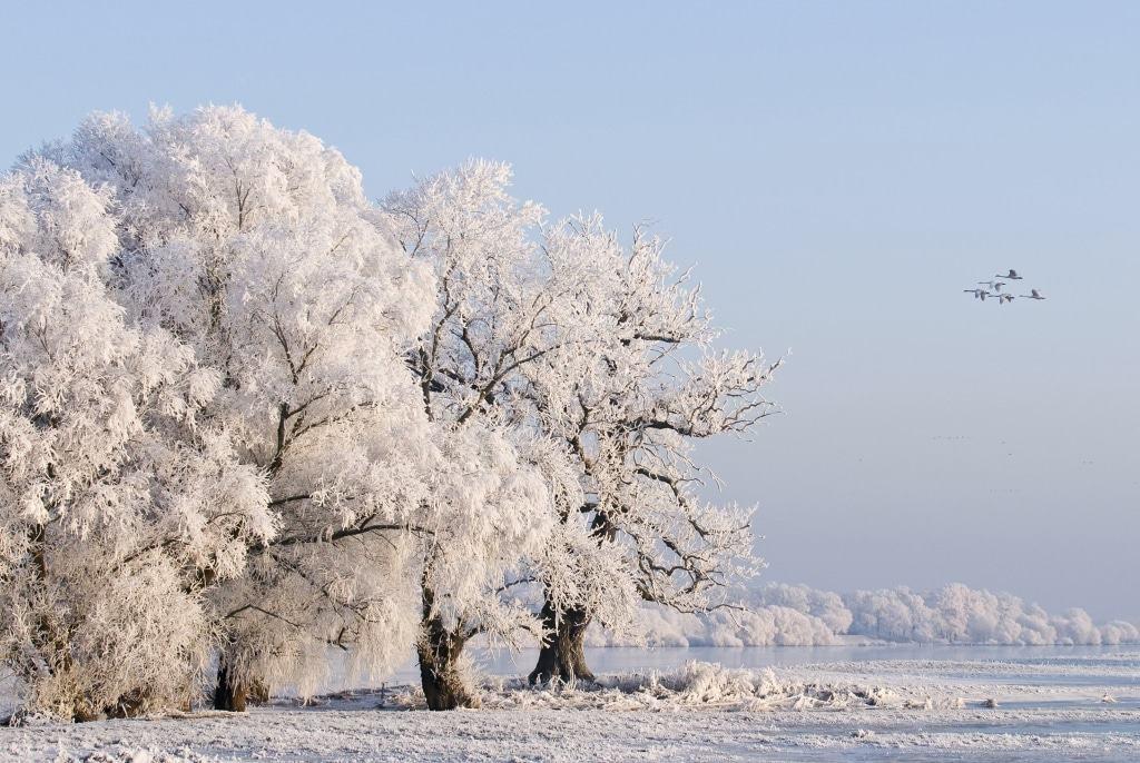 Winterliche Elblandschaft mit Raureif, Foto: Dieter Damschen