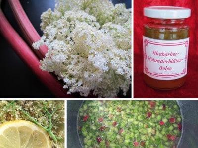 Köstliches Gelee aus Rhabarber und Holunderblüten