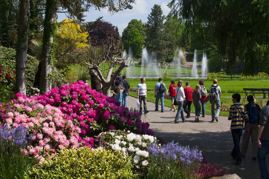 Blühender Rhododendron im Weltvogelpark Walsrode