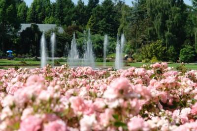 Blühende Rosenbeete und Wasserspiele - Impressionen/Foto Weltvogelpark Walsrode 2015