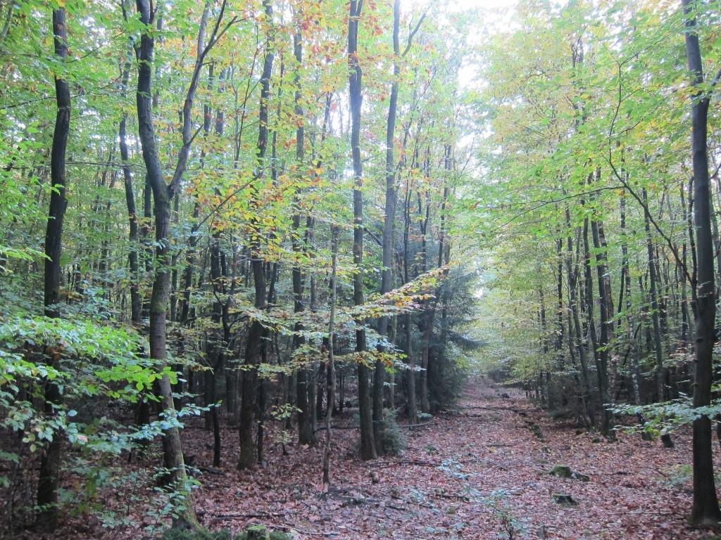 Lüßwald Naturpark Südheide: Rückegasse in jungem Forst