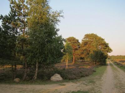 Heidelandschaft mit Wanderweg Osterheide Schneverdingen